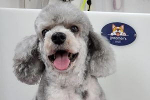 Groomers Wall - Happy Pet